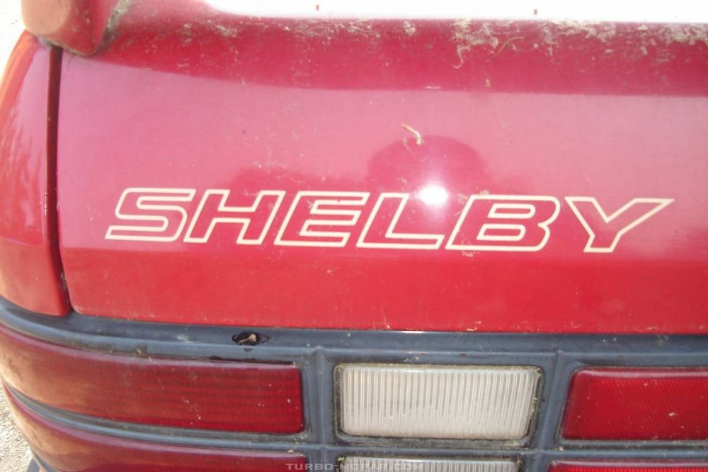 SHELBY Hatch Decal